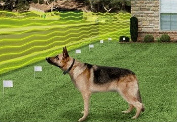 Best Wireless Dog Fence Dec 2018 Buyer S Guide Amp Reviews