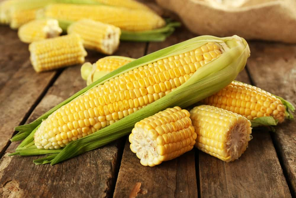 Can Dogs Eat Corn Cobs?