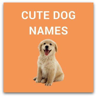 Cute Dog Names