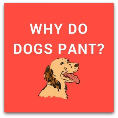 Why Do Dogs Pant