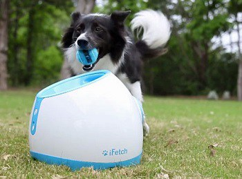 Best Automatic Ball Thrower For Dogs