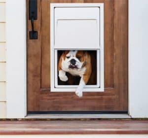 Best Electronic Dog Doors 2020 – Buyer's Guide