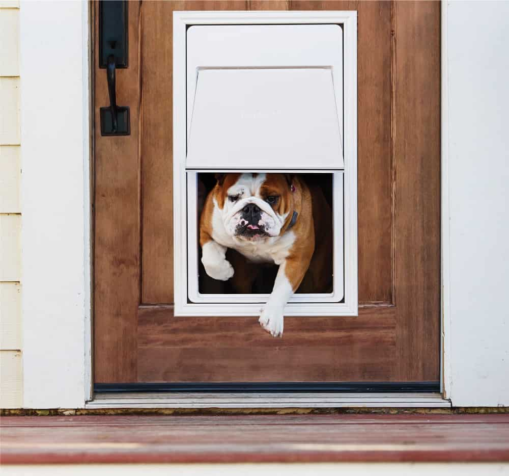 Best Electronic Dog Doors July 2019 Buyer S Guide And