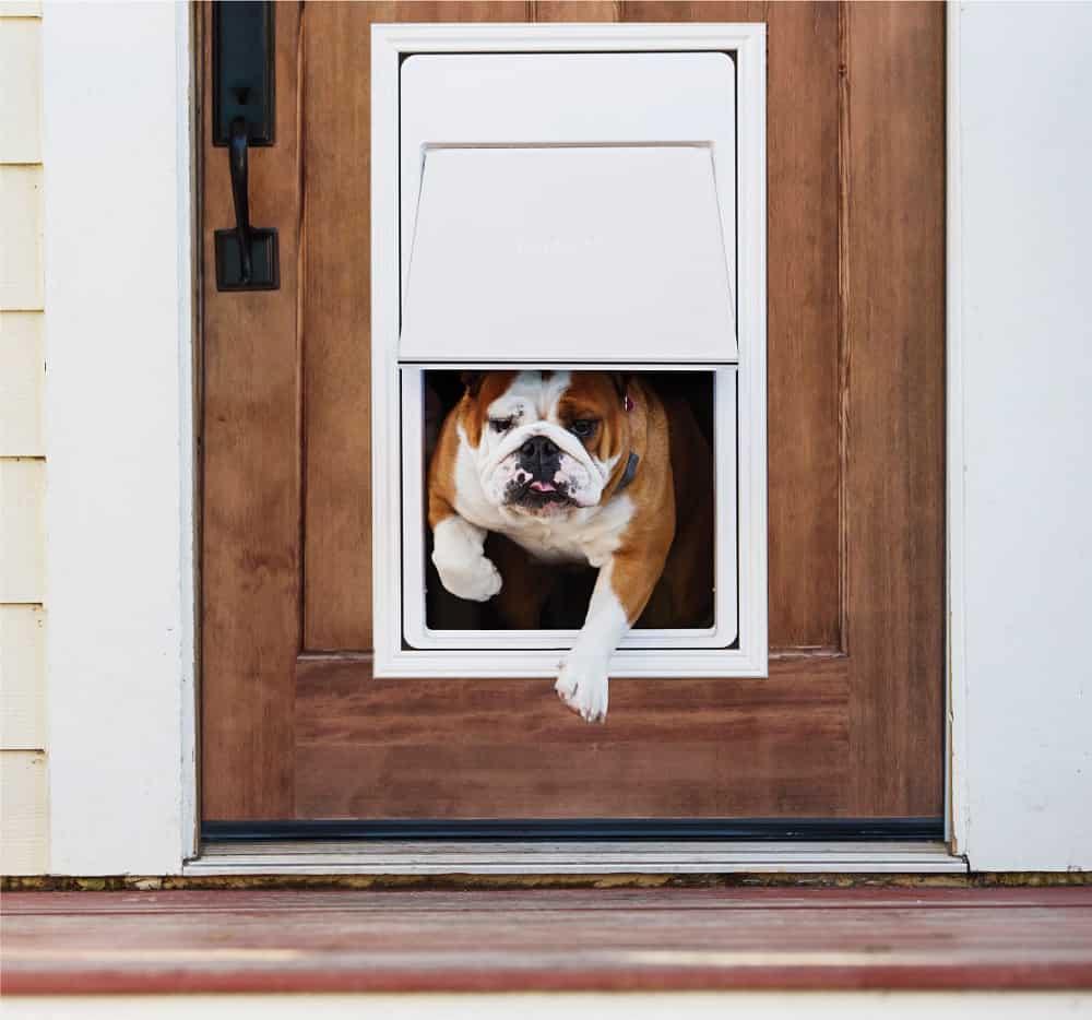 Best Electronic Dog Door Reviews