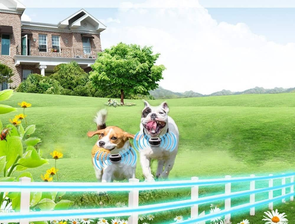 Wireless Dog Fence For Small Dogs Reviews