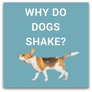 Why Do Dogs Shake
