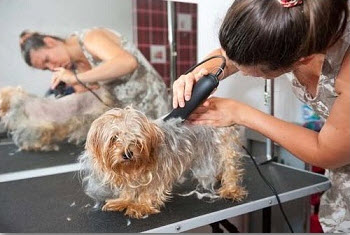 Dog Clippers Buyers Guide