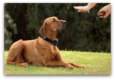 Best Waterproof Dog Training Collar to Train Your Dog