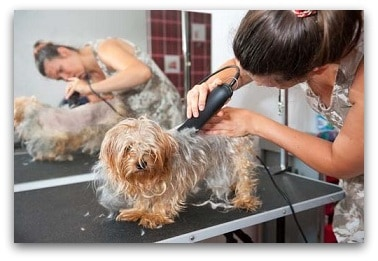 Dog Clippers Guide