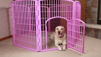 Best Dog Pen