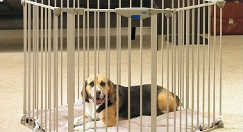 Best Playpen for Dogs