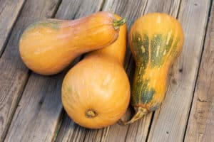 Can Dogs Eat Squash?
