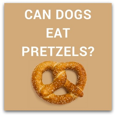Can Dogs Eat Pretzels?