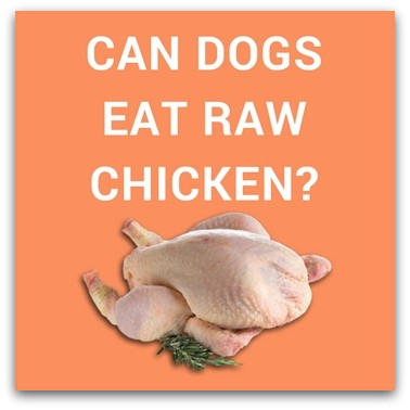 Can Dogs Eat Raw Chicken?