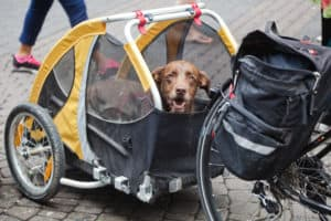 Best Dog Bike Trailer 2019 – Buyer's Guide
