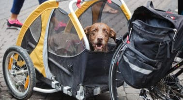 Best Dog Bike Trailer