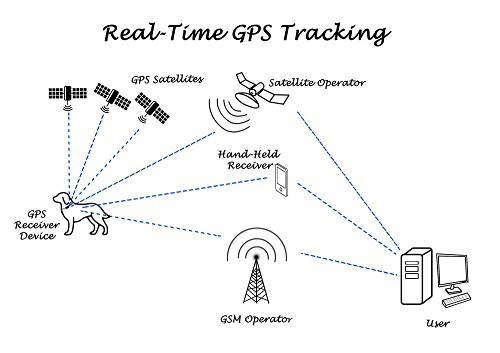 Real Time Dog GPS Tracking