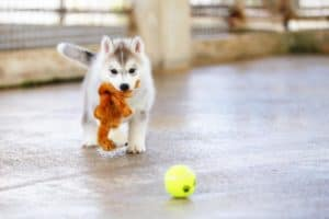 How to Keep a Puppy Busy During the Day (Infographic)