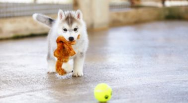 How to Keep a Puppy Busy During the Day