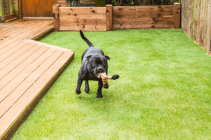 Best Artificial Grass For Dogs 2020 – Buyer's Guide