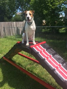 DIY Dog Ladder