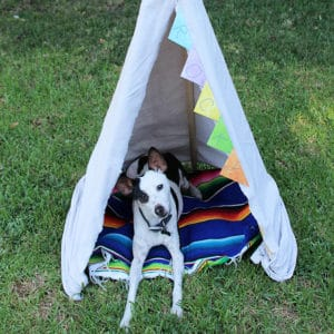 How to Make Your Own Pet Teepee