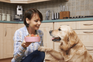 Best Dog Food for Golden Retriever 2021 – Buyer's Guide