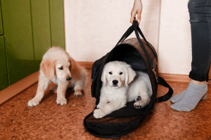 Best Airline Approved Pet Carrier 2021 – Buyer's Guide