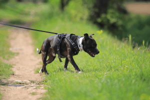 Best Escape Free Dog Harness 2019 – Buyer's Guide