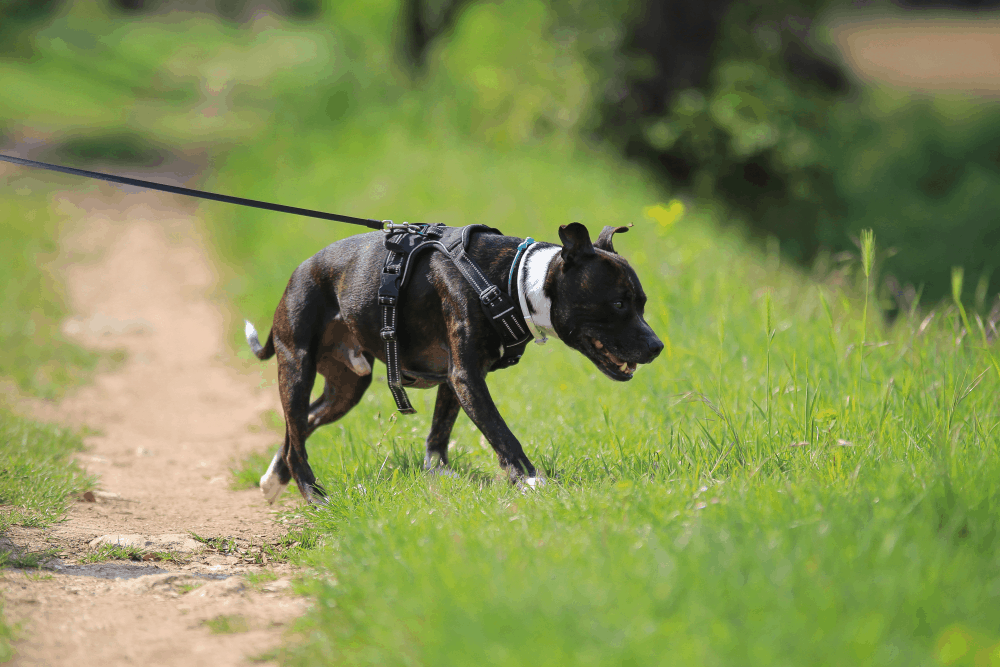 Best Escape Free Dog Harness