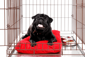 Best Heavy Duty Dog Crate 2019 – Buyer's Guide