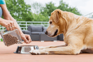 Best Salmon Dog Food 2019 – Buyer's Guide