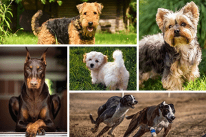 60 Dog Breeds That Don't Shed