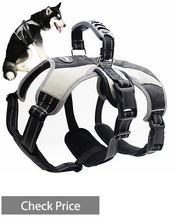 Mihachi Secure Escape Proof Harness