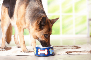 Best Dog Food for German Shepherds With Skin Allergies 2019 – Buyer's Guide