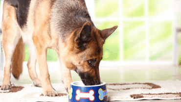 Best Dog Food for German Shepherds with Skin Allergies
