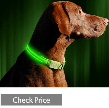 Illumiseen LED Dog Collar