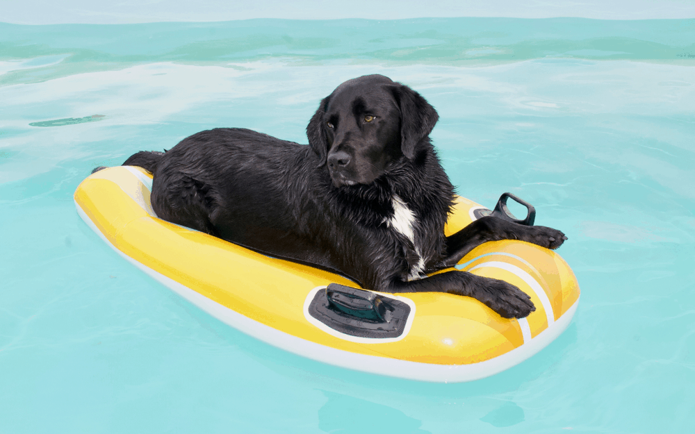Best Dog Pool Floats