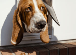 How High Should I Install A Dog Door?
