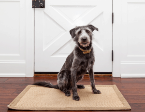 Best Dog Door for Cold Weather 2020 – Buyer's Guide