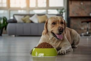 Best Grain Free Dog Food For Sensitive Stomach 2021 – Buyer's Guide