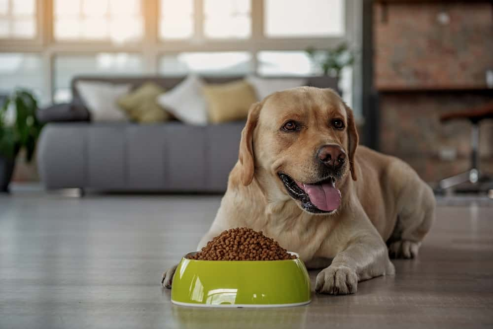 Best Grain Free Dog Food for Sensitive Stomach