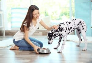 Best Dry Dog Food For Loose Stools 2021 – Buyer's Guide