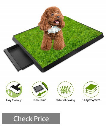 Grass Patch for Dogs