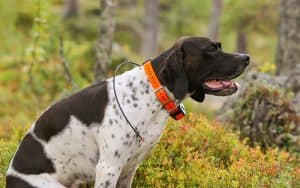 The Evolution of Pet Tracker Gadgets: Present and Future